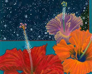Night Hibiscus