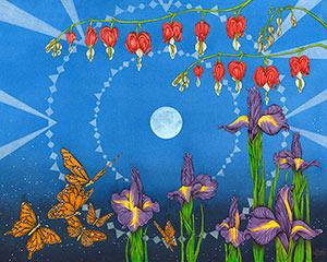 Butterfly Dream VIII